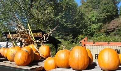 Fab Fall Activities at Mount Vernon Towers